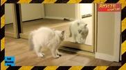 Как реагират животните на образа си в огледалото