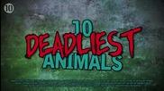 10-те най-смъртоносни животни