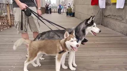 Mishka, Laika and Moki