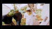 Премахване на Пчели Настанили се в Къща Обърни го на печалба: Пчелин