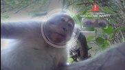 Маймунка краде Gopro камера