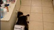 Любопитно коте си заклещи главата в кутия!