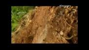Ед Стафорд Гол на необитаем остров Епизод 2