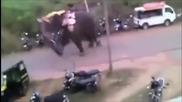 Слон подивя и стъпка всичко по пътя си
