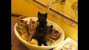 5 много сладки котенца ... ^_^
