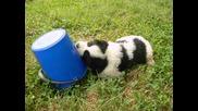 Бойка се бори с кофата