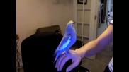 Птица Прави Beatbox