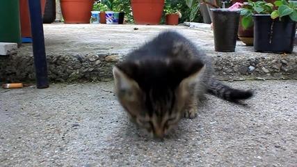 Прегладняло малко котенце