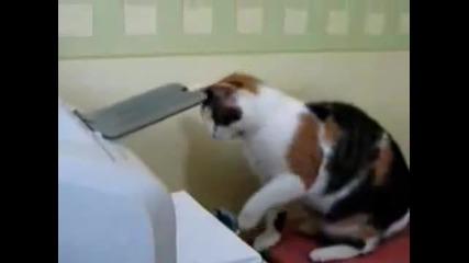 Котка си принтира документи - Смях
