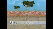 Учени доказват, че златото расте по дърветата