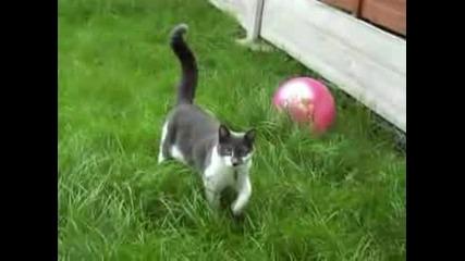 Атаката На Котката (високо Качество)