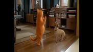 Garfield - Garfield And Odie Dance