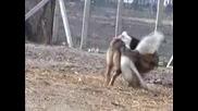 Куче Срещу Патица - Кой Ли Ще Победи