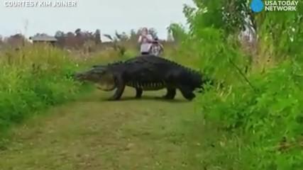 Почти динозавър