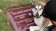 Куче плаче на гроба на стопанина си