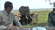 Слон показва на туристи , кой е господарят на саваната!