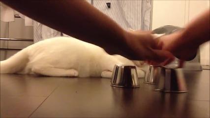 """Котка играе """"тука има – тука няма"""""""