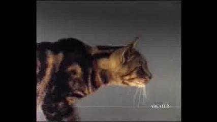 crazy cat :)