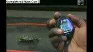 Rob & Big - Turtle Training