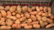 Sweet Potato Cleaning and Peeling Machine, Vegetable Peeling