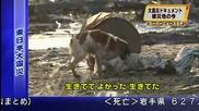 Японско куче спаси приятеля си от смърт -