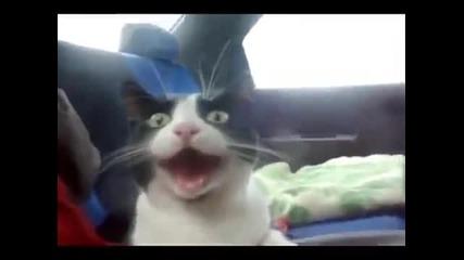 Коте в шок от Subaru Impreza
