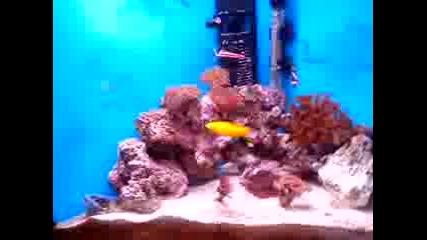 Соленоводният ми аквариум