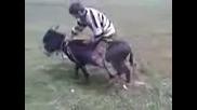 Пали магарето и газзз :d