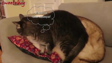 Коте намира най-удобната възглавничка