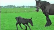 Две кончета на 4 дни от Белгийска порода се радват на първите си стъпки