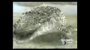 Крокодил Срещи Лъв - Крокодила Побеждава