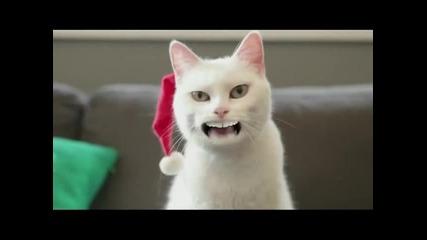 Котка пее коледна песничка (смях)