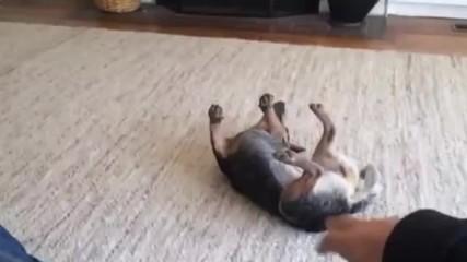 Dean Potter - Whisper Dog Kung-fu