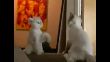 Две забавни котенца!