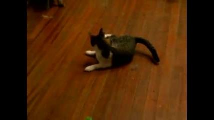 Пияна Котка (смях)