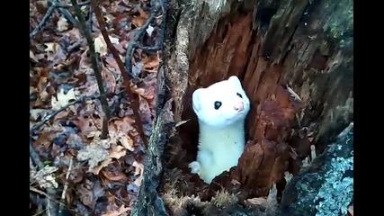 Сладко малко животинче се показва от дънер