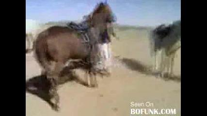 Арабин се опитва да се качи на кон,  но... само прави смях на околните