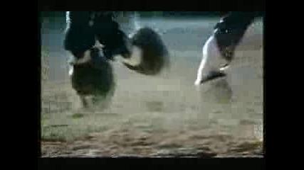 Rolex Equestrian Commercial - 1