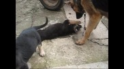 Малко сладко синеоко кученце