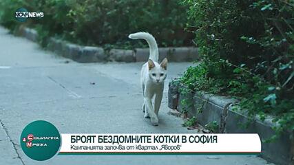 """Започва преброяване на бездомните котки в столичния квартал """"Яворов"""""""