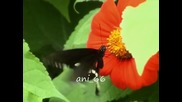 * Srebrna krila - Ostani