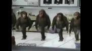 Танцуващи маймуняци