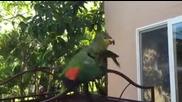 Папагалче се кефи на сутрешната си баня