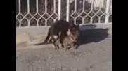 Видео0114