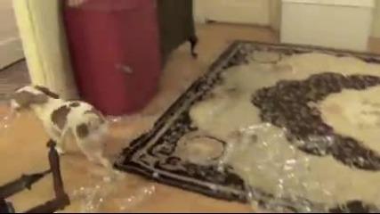 Куче събаря пирамида от бутилки