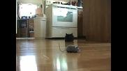 Коте го е страх от изкуствена мишка