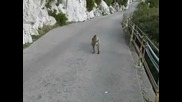 Маймуна проверява жена за въшки !