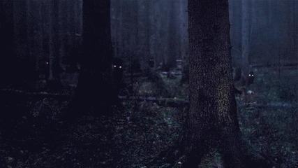 В прокълнатата гора