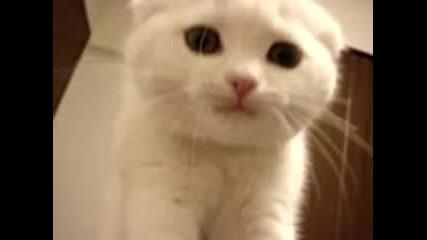 Сладко Бяло Котенце Мечи