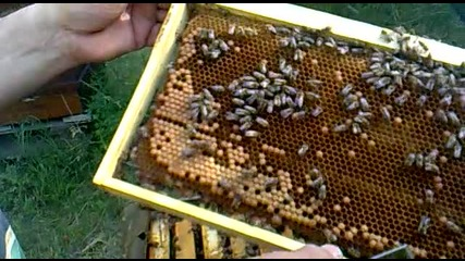 Пчелин Пловдив